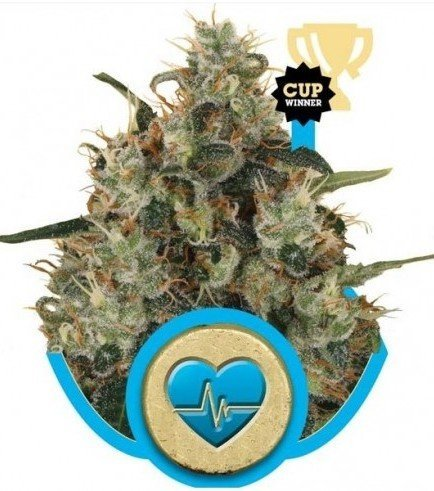 Medical Mass (Royal Queen Seeds)