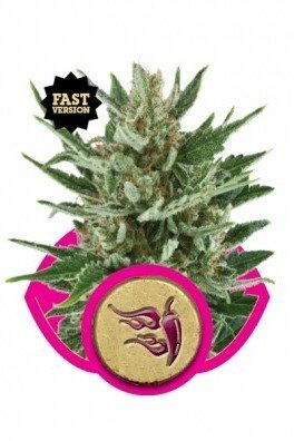 Speedy Chile - Fast Version (Royal Queen Seeds)