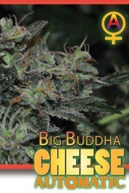 Big Buddha Cheese Automatic (Big Buddha Seeds)