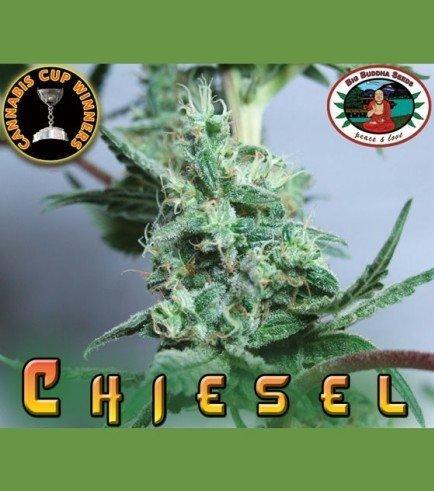 Chiesel (Big Buddha Seeds)