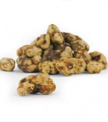 Psychedelic Truffles Tampanensis, 15 grams