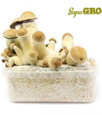 Magic Mushroom Grow Kit Penis Envy