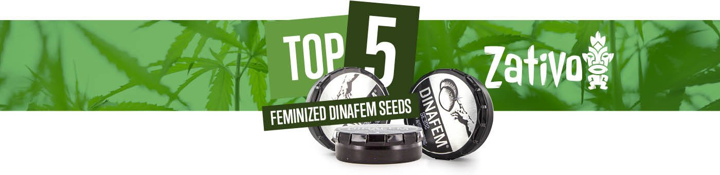 Top 5 Feminized Dinafem