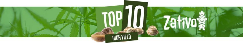 Top 10 High Yielders