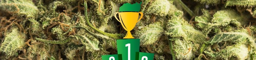Kush Cup Winner