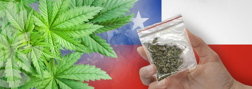 Weed-Friendly Countries: Chile
