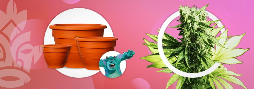 Bigger Containers For Monster Weed Plants