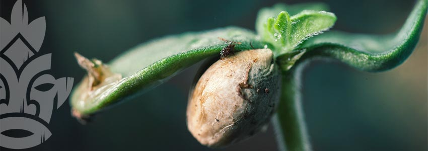 ADVANTAGES OF GROWING FROM SEED