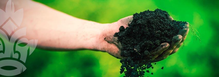 MAKING ORGANIC SOIL FOR WORLD-CLASS CANNABIS