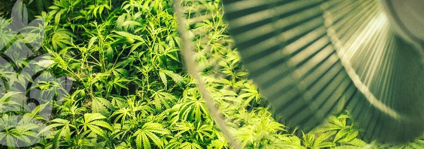 Grow Cannabis on a Budget - Ventilation