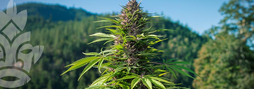 Grow Cannabis on a Budget - Perfect Location