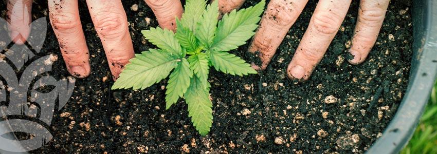 Grow Cannabis on a Budget - Organic Fertilisers