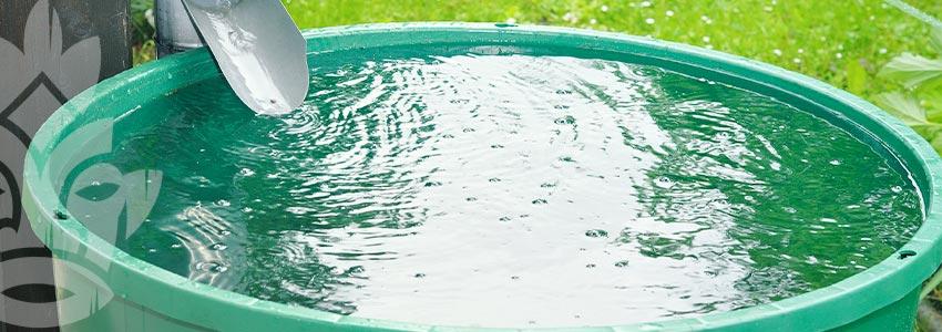 Grow Cannabis on a Budget - Use Rainwater