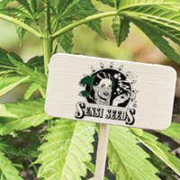 All cannabis seeds from Sensi Seeds