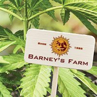All cannabis seeds from Barney's Farm