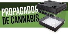 Propagador de Cannabis