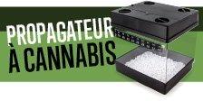Propagateur à Cannabis