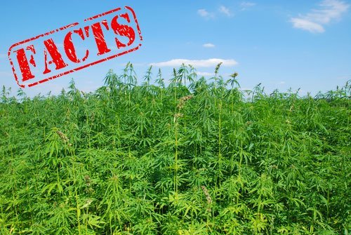 Facts about Hemp