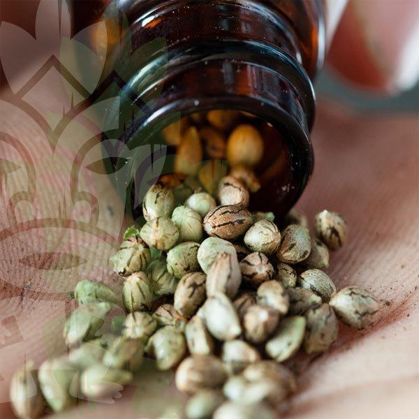 Storage of cannabis seeds