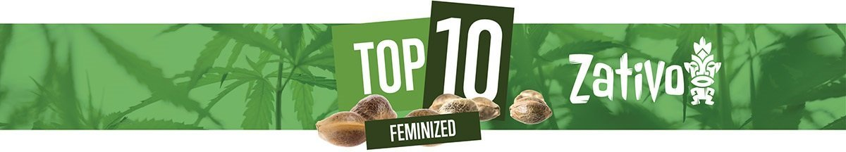 Top 10 Feminized Seeds