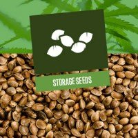 Storage of Cannabis Seeds