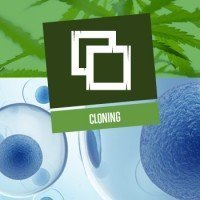 Cloning (Cuttings)