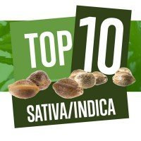 Top 10 Sativa-Indica Cannabis Strains