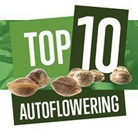Top 10 Autoflowering Seeds