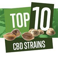 Top 10 CBD Seeds