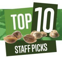 Top 10 Staff Picks