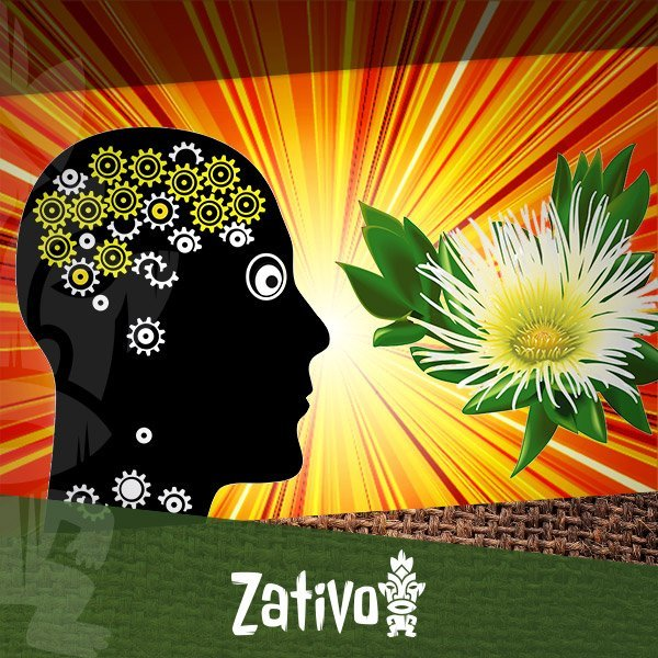 Zativo - The Effects of Kanna (Sceletium Tortuosum)