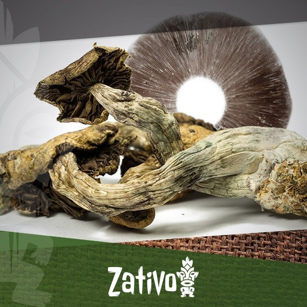Zativo - How To Make Your Own Magic Mushroom Spore Prints