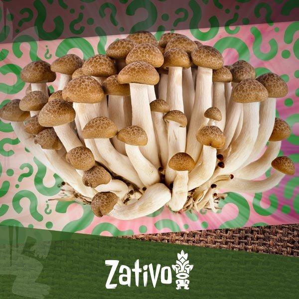Zativo - How To Grow Your Own Magic Mushrooms