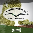 Introduction: 7 New Strains By Dutch Passion