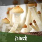 The History Of Magic Mushrooms