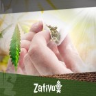 Top 20 Best-Selling Rolling Papers