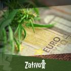 How To Grow Cannabis on a Budget