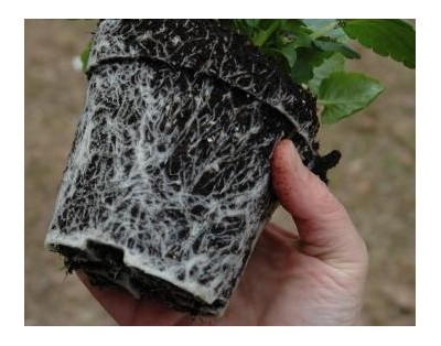 Dealing With Root Bound Plants