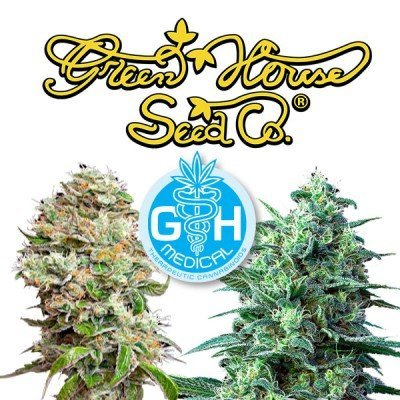 Introduction: 5 new CBD strains by Greenhouse