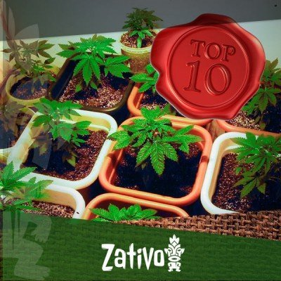 The 10 Most Important Tips For First Time Cannabis Growers