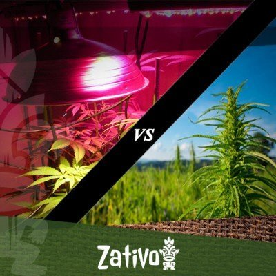 Indoor vs outdoor cannabis growing: the key differences