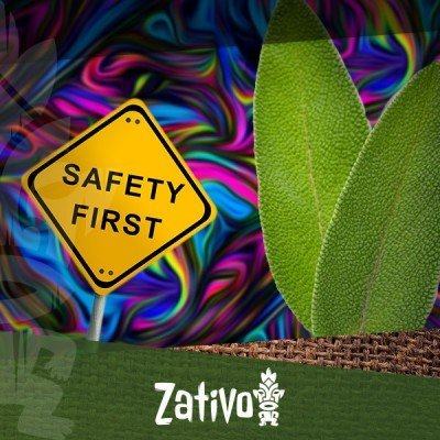 Salvia Divinorium - 10 Tips On How To Have A Safe Trip