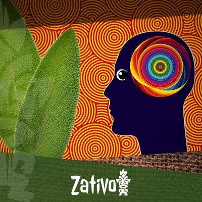The Effects of Salvia Divinorum