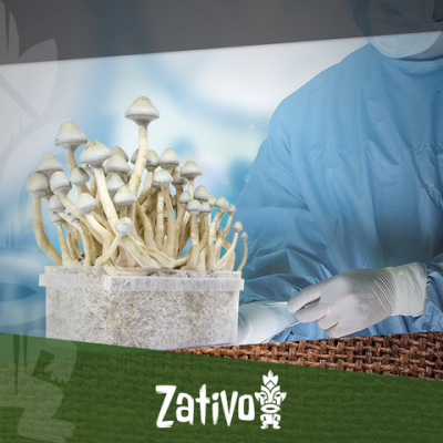 Magic Mushrooms - How To Work Sterile