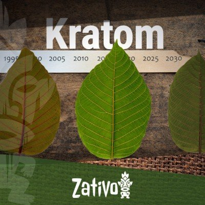 The History Of Kratom
