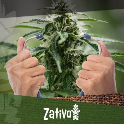 How To Check Your Cannabis Plant's Health