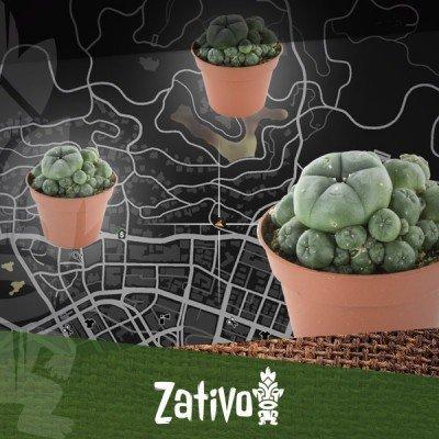 Find Peyote Cacti In GTA 5