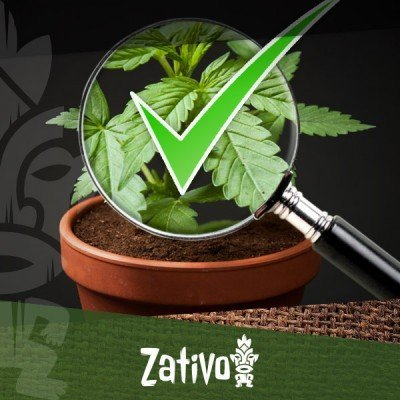 8 Tips On How To Recognise Good Cannabis