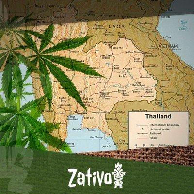 Origins Of The Thai Strains
