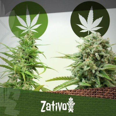 The Difference Between Cannabis Indica And Sativa